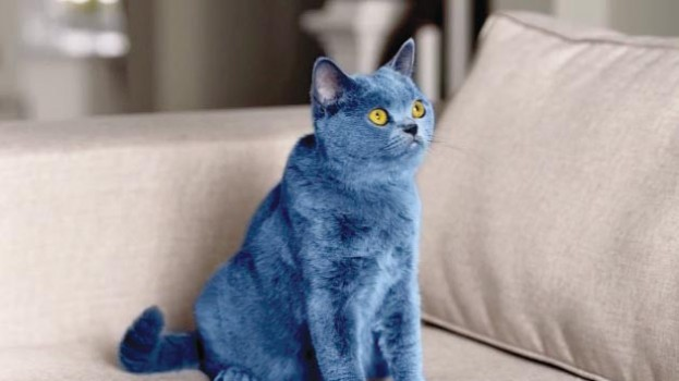 CASSIES Gold: Smarties Blue Cat has purrfect timing » strategy Smarties Canada