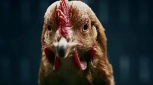 mercedes-chicken-hed-2013