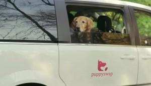 puppyswap2