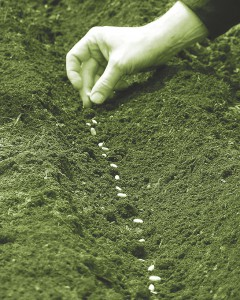 planting-seeds_green