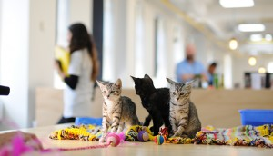 Kittens_1
