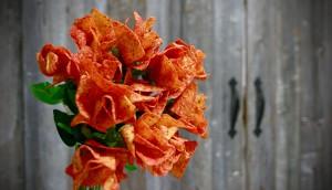 Doritos Ketchup Roses High Res -1