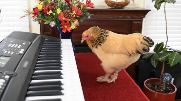 ChickenChopin