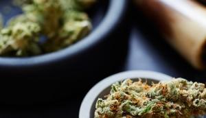 Medical Marijuana/ Cannabis And Accessories