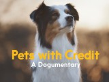 "Credit cards have actually been issued to pets. Playing off this bizarre truth, Zulubot produced Interac's ""dogumentary"" Pets with Credit about a dog who gets a credit card."