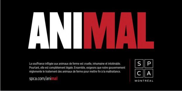 SPCA-main2