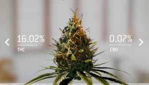 Cannabinoid Profile