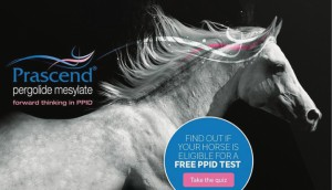 Lemieux Bédard's expertise extends to the equally challenging animal pharma market too! Its campaign for Prascend used a smart quiz to increase awareness of an underdiagnosed equine disease. It boosted sales by 37%.