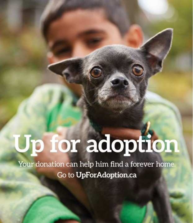 UpforAdoption1