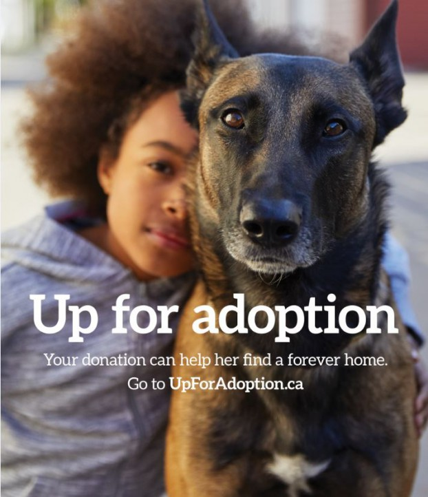 UpforAdoption2