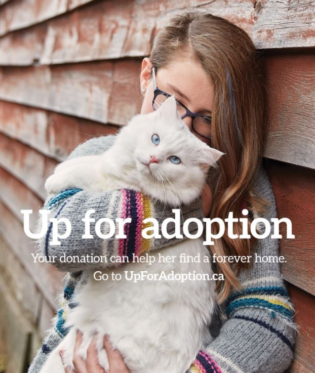 UpForAdoption3