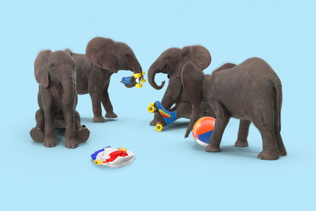 The Local Collective uses its social channels to prompt response and to mirror cultural trends (thus the elephant playtime post), which advances understanding and insights as to what works in the space, versus the more traditional approach of displaying office moments