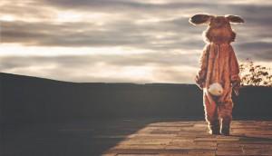 rabbit-image