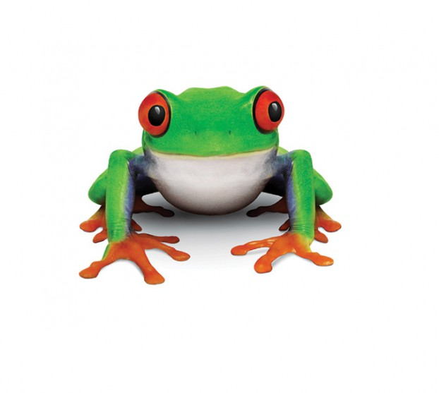 Frog_Frt_Sit_EyesR_m.eps