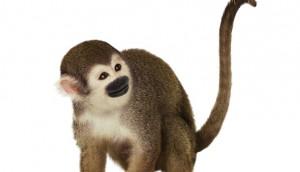 Monkey_Bird_On_Tail1_mag