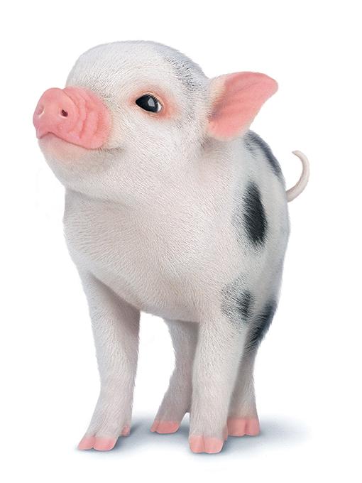 9 Pig with Mistletoe