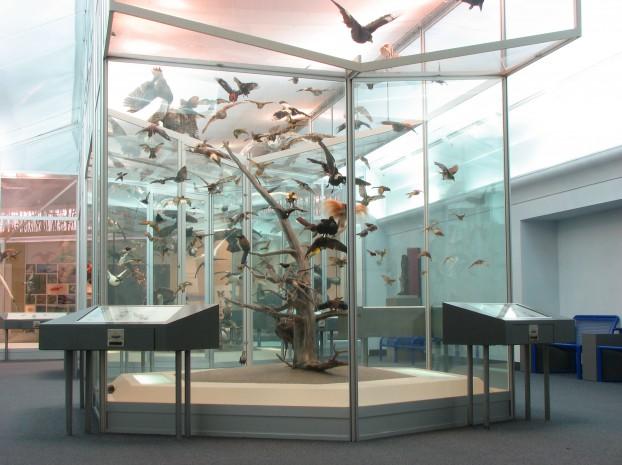 Bird_Gallery