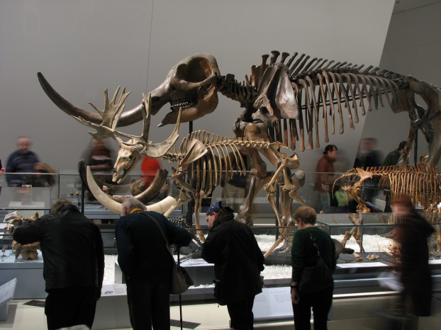 Gallery_of_the_Age_of_Mammals