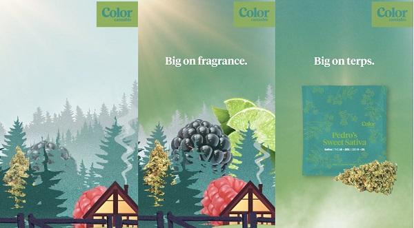 color-cannabis