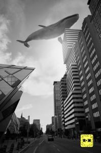 Whales Snap AR TSA[1]